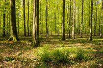 Frühlingswald von Armin Redöhl