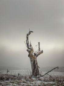 Abgestorbener Baum im Nebel bei Stockach im Hegau von Christine Horn