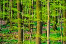 Frühlingswald im Wind by Armin Redöhl