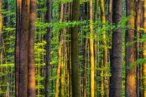 Frühlingswald am Nachmittag von Armin Redöhl