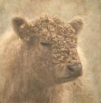 Highland cattle von Anne Seltmann