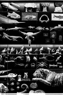 Die Sammlung von Oliver  Rossol