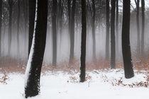 Nebel im Winterwald von Thomas Schulz