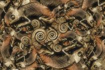 Chamäleonkuddelmuddel von garrulus-glandarius