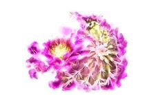 Lovely Pink Cactus Flower von Elisabeth  Lucas