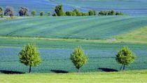 Fränkische Landschaft by Andrea Meister