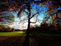 Herbststimmung von Zarahzeta ®