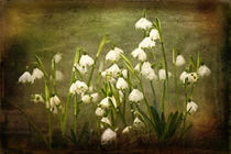 Snowdrops by Liz Alderdice