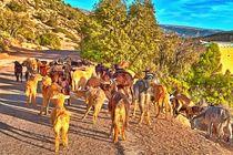 Ziegenherde in den Bergen Marokkos in der Nähe von Agadir by Gina Koch