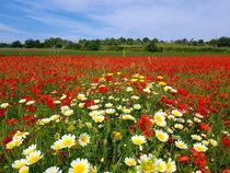 Blumenwiese - Blühende Blumen und blauer Himmel von wirmallorca
