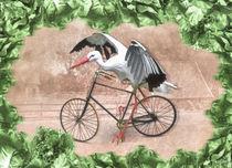 Storch im Salat von garrulus-glandarius