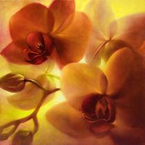 Orchideen von Annette Schmucker