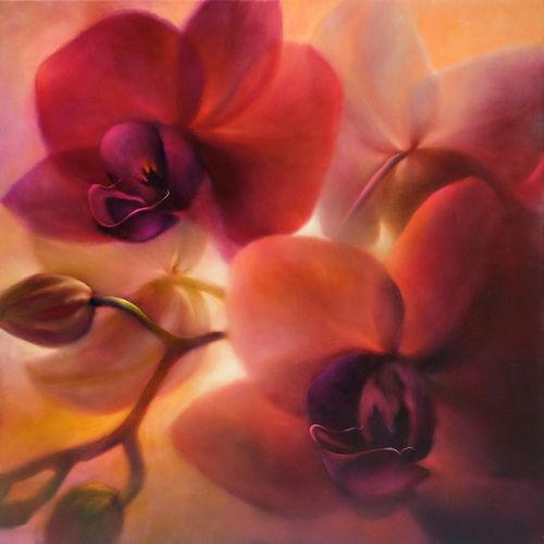 1524-orchideen