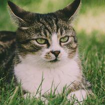 Die zufriedene Katze von Christian Handler