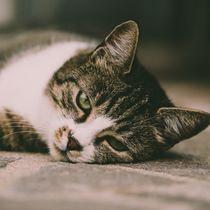 Die schläfrige Katze von Christian Handler