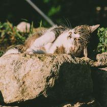 Die Katze im Garten von Christian Handler