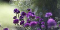 Blume X von Michael Schulz-Dostal
