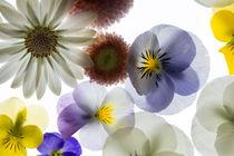 Frühlingsblüten by Wolfgang Cezanne