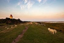 Schafe auf Deich mit Leuchtturm by Björn Knauf
