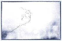 Freiheit / 2 von Heidi Bollich