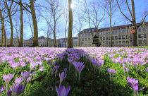 Frühling in Freiburg von Patrick Lohmüller