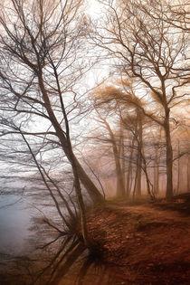 Nebel am Ufer von Stefan Kierek