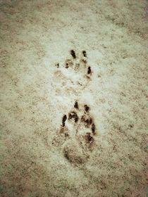 Spuren im Schnee von Ronny Schmidt