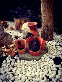 Garten von Ronny Schmidt