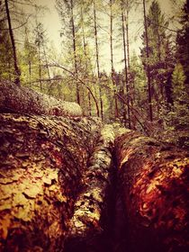 Wald von Ronny Schmidt