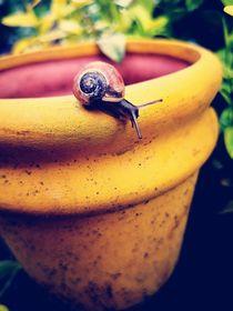Garten by Ronny Schmidt
