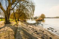 Herbstweiden 89 by Erhard Hess