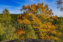 Herbst von André Lanzke