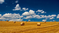 Sommer von Kilian Schloemp