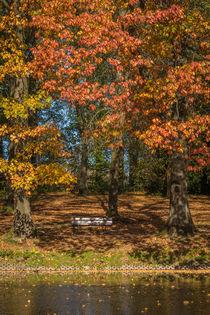 Herbstlicher Teich von Simone Rein
