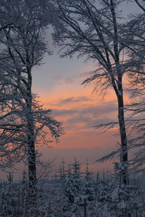 Winterlandschaft by Simone Rein