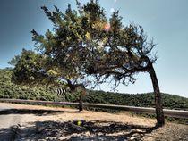 'Bäume im Wind' by smk