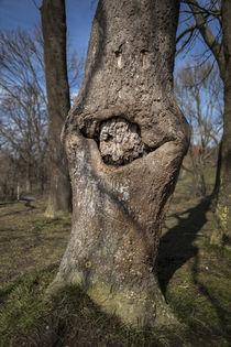 Lachender Baum von Michael Winter
