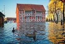 Hochwasserente in Wismar von Michael Winter
