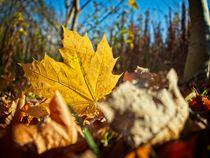 Herbststimmung von Michael Winter