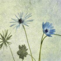 Blue dancers in the wind von Rosina Schneider