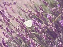 Butterfly / Schmetterling von vogtart