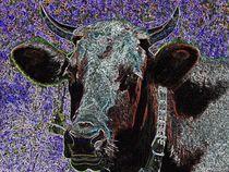 Cow / Kuh Popart von vogtart