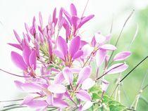 Flower von vogtart