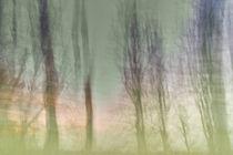 meer im wald X von Nicole  Matzke