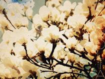 Magnolia Aquarell von vogtart