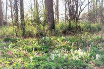 Frühling im Auenwald von garrulus-glandarius