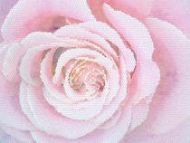 Rose von vogtart