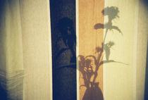 Lomo: Schattenspiel mit Bartnelke von Doreen Trittel