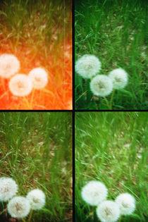 Pusteblumen pusten von Doreen Trittel