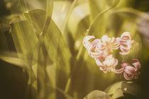 Hyazinthen mit Frühlingsgefühl von Petra Dreiling-Schewe